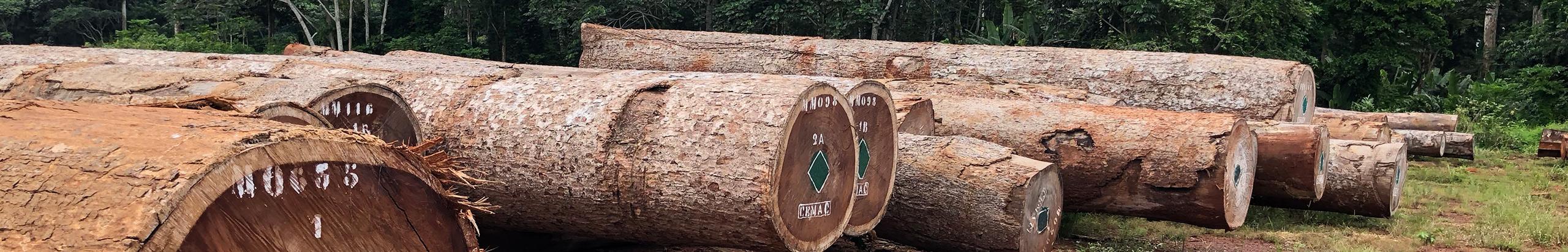 round-timber 3